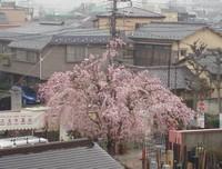 2006411_hanamidera