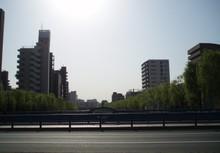 200654_yanagi_1