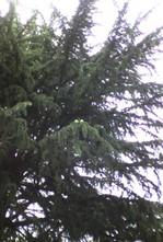 20066_matsubokkuri