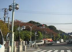 asukayama_02