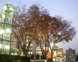 musubi_no_keyaki_03